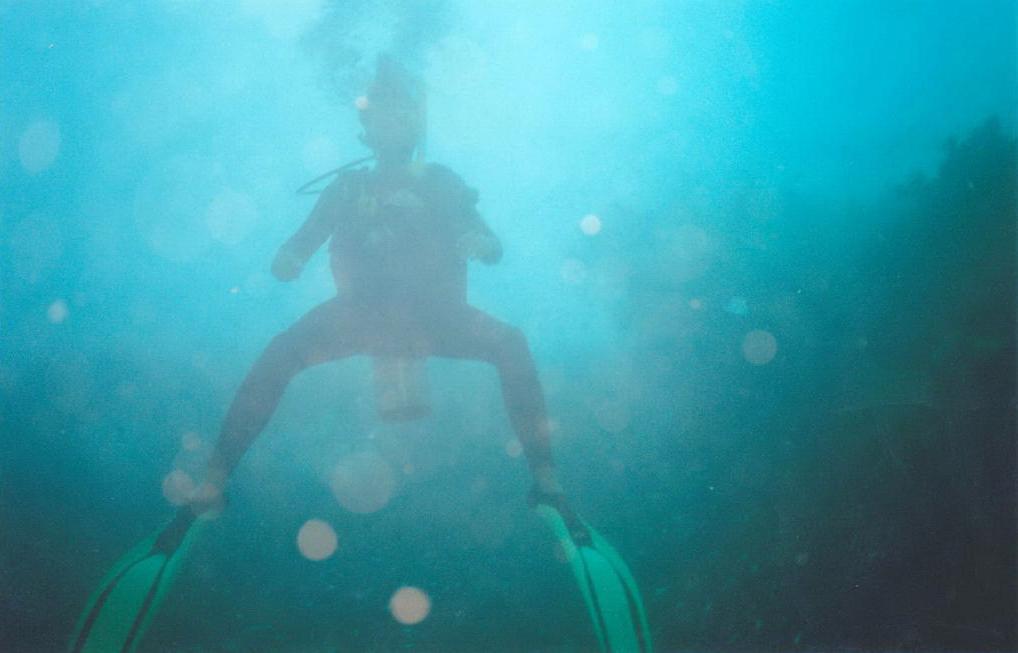 Diving in Queensland, Australia